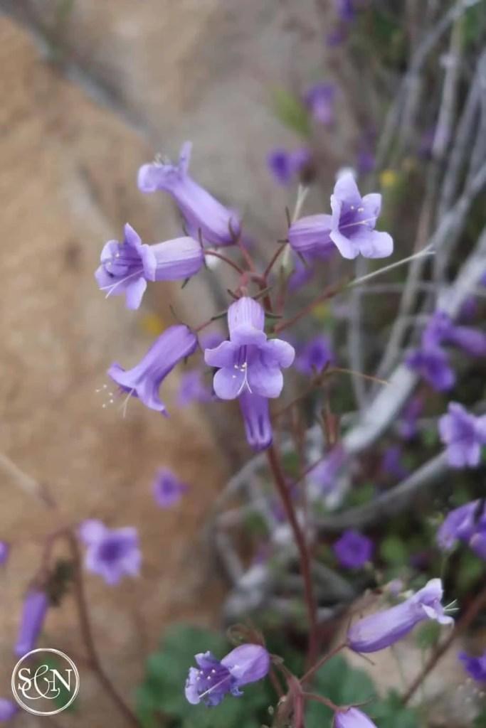 day 16 Purple flowers
