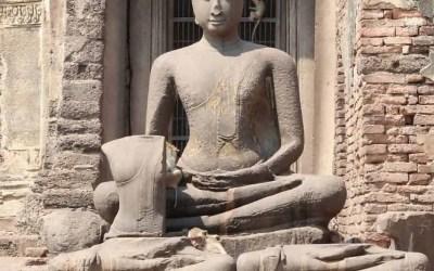 Lopburi Monkey Temple: Visit this treasure!
