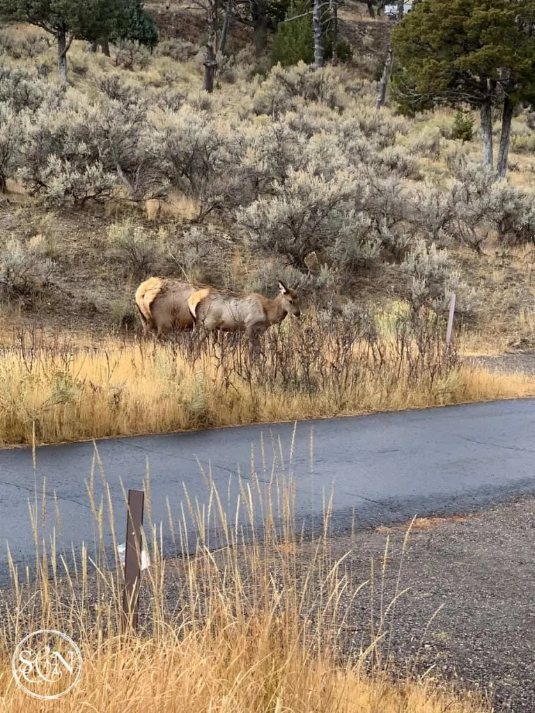 Yellowstone National Park - Top 5 favorite spots