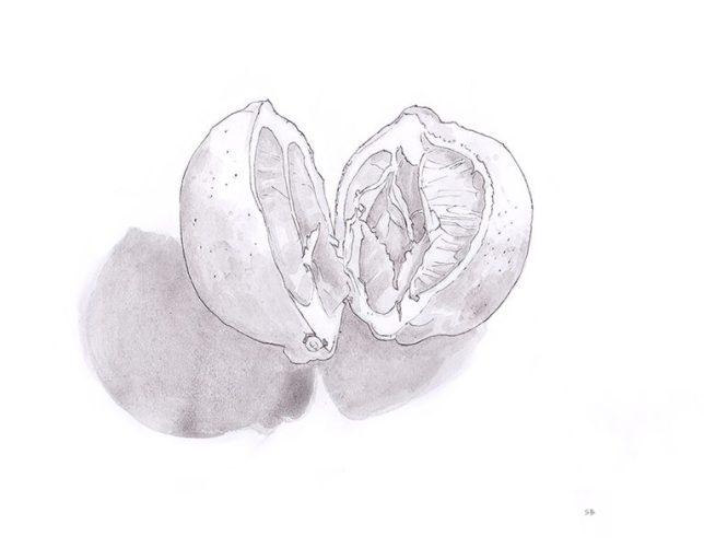 lemon-divided-inktober-2017-steve-beadle-art