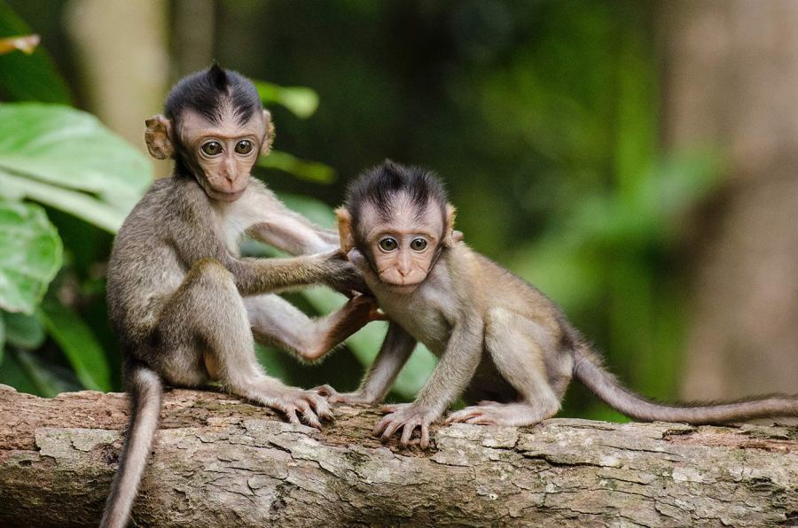 Two small monkeys on a tree branch