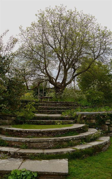 Ancient much propped mulberry tree