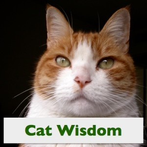 Cat Wisdom, in More Photos, Photos of Cats by Steve Kaye