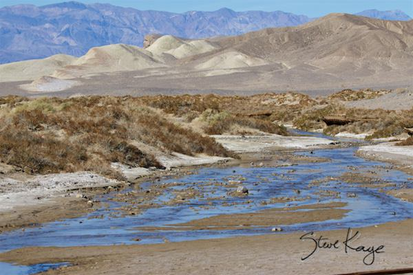 Salt Creek, Death Valley National Park, (c) Photo by Steve Kaye, in Post: How to Photograph a Marsh Wren