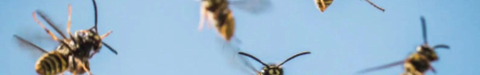 Dynamics 365 – Kicking the Hornets Nest