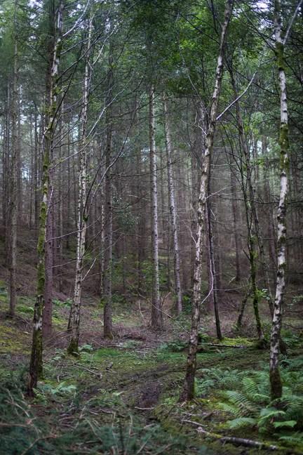High_Close_woodland_BYdavidcole