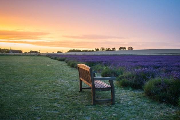 Lavender_Sunset