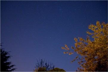 The_tree_at_night_robertnurse