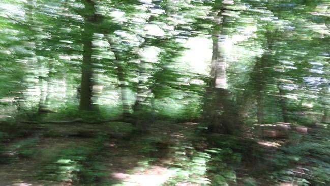 warped_woods