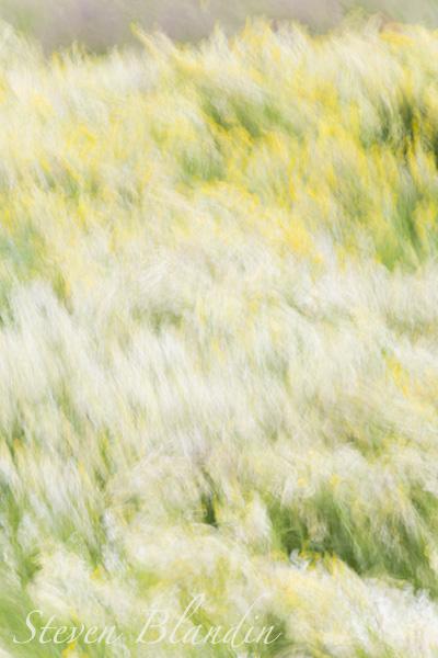 Mastodon Flowers blur