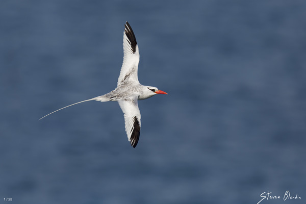 Courtship Flight - Fine Art Photography