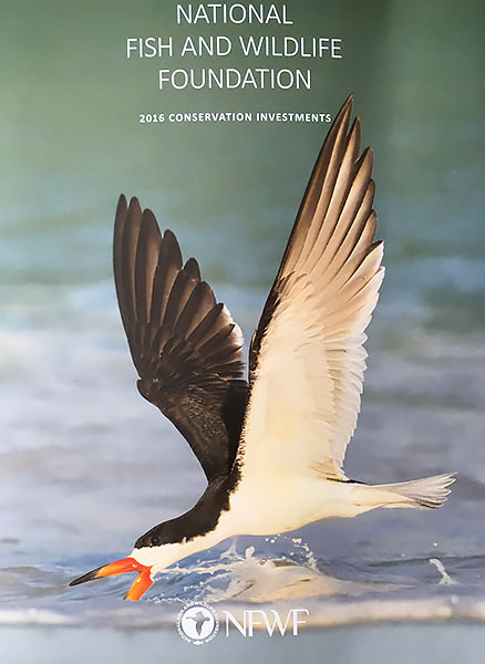 Black Skimmer - National Fish & Wildlife Foundation Cover