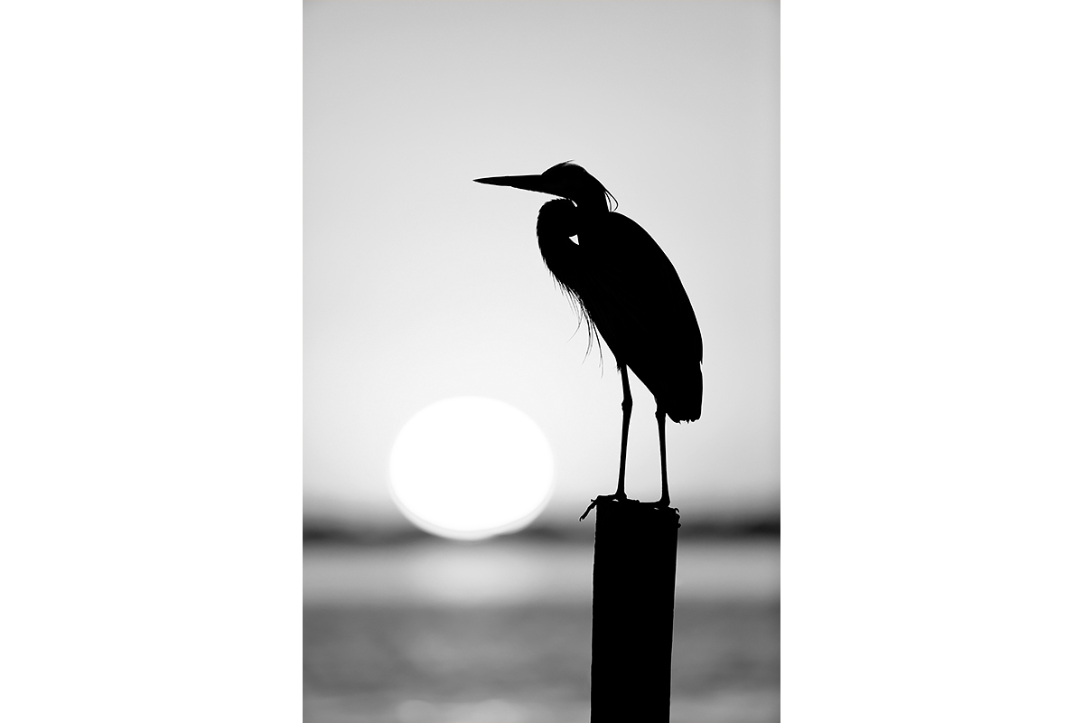 Black and White_Fine Art_Sunset Silhouette