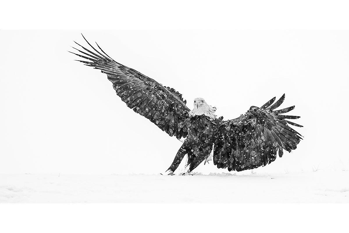 Black and White_Fine Art_Snow Storm Landing