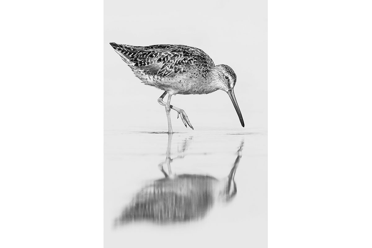 Black and White_Fine Art_Walking Reflection
