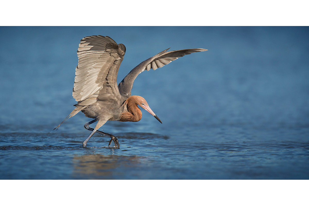Fine Art Florida Birds_On The Hunt