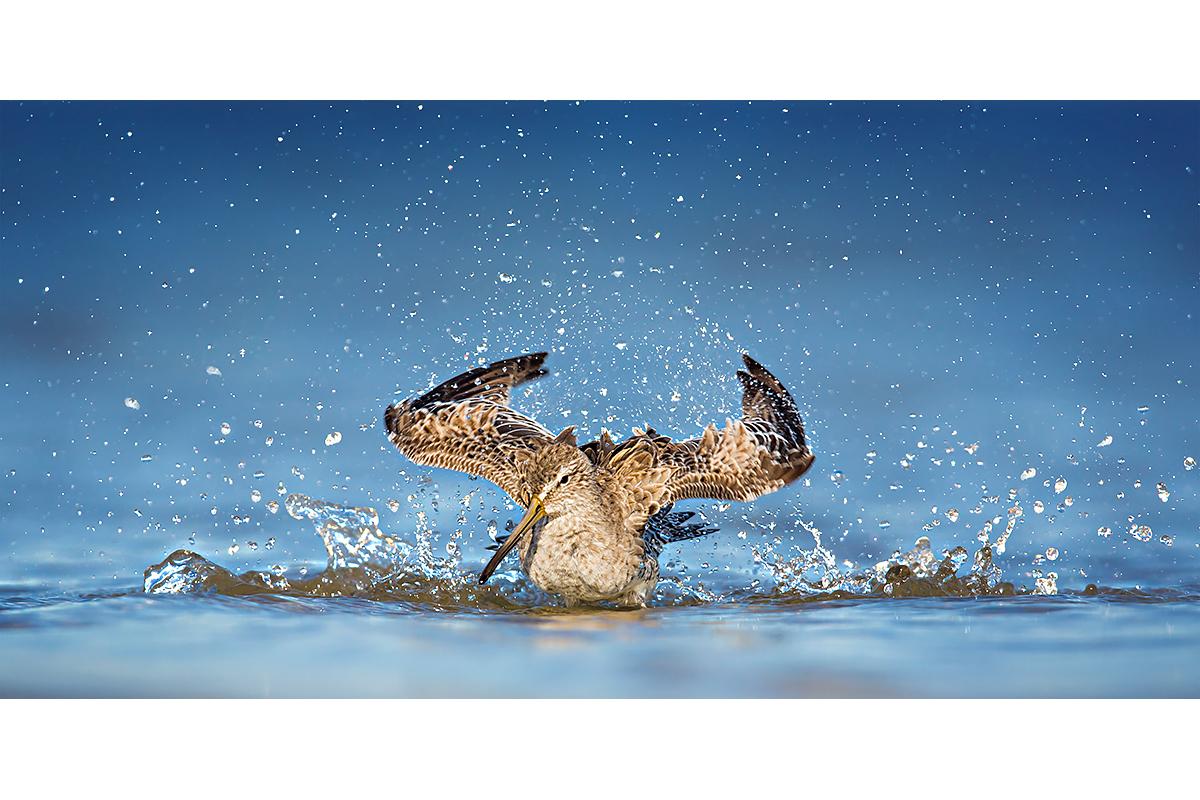 Fine Art Florida Birds_Bathing Chaos