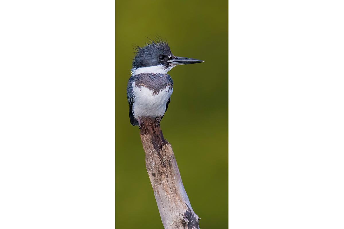 Fine Art Florida Birds_On A Perch