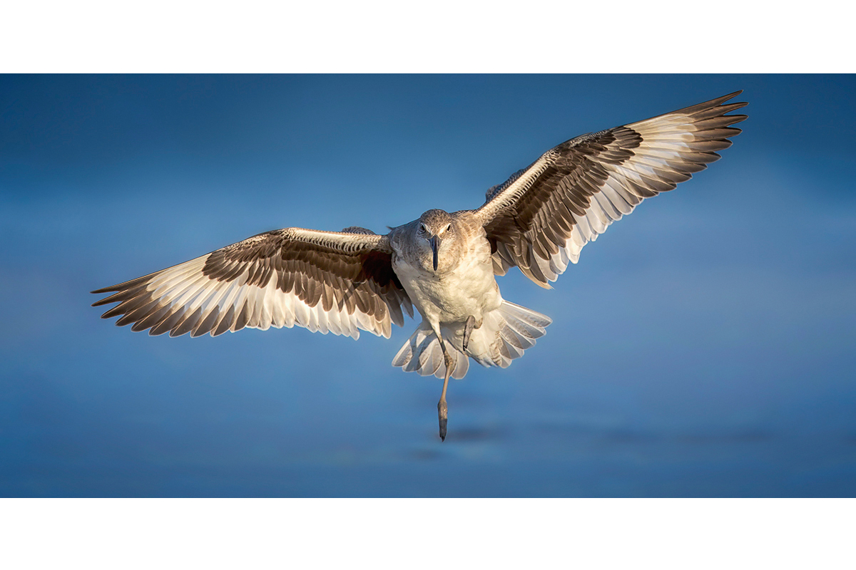 Fine Art Florida Birds_Tilted Landing