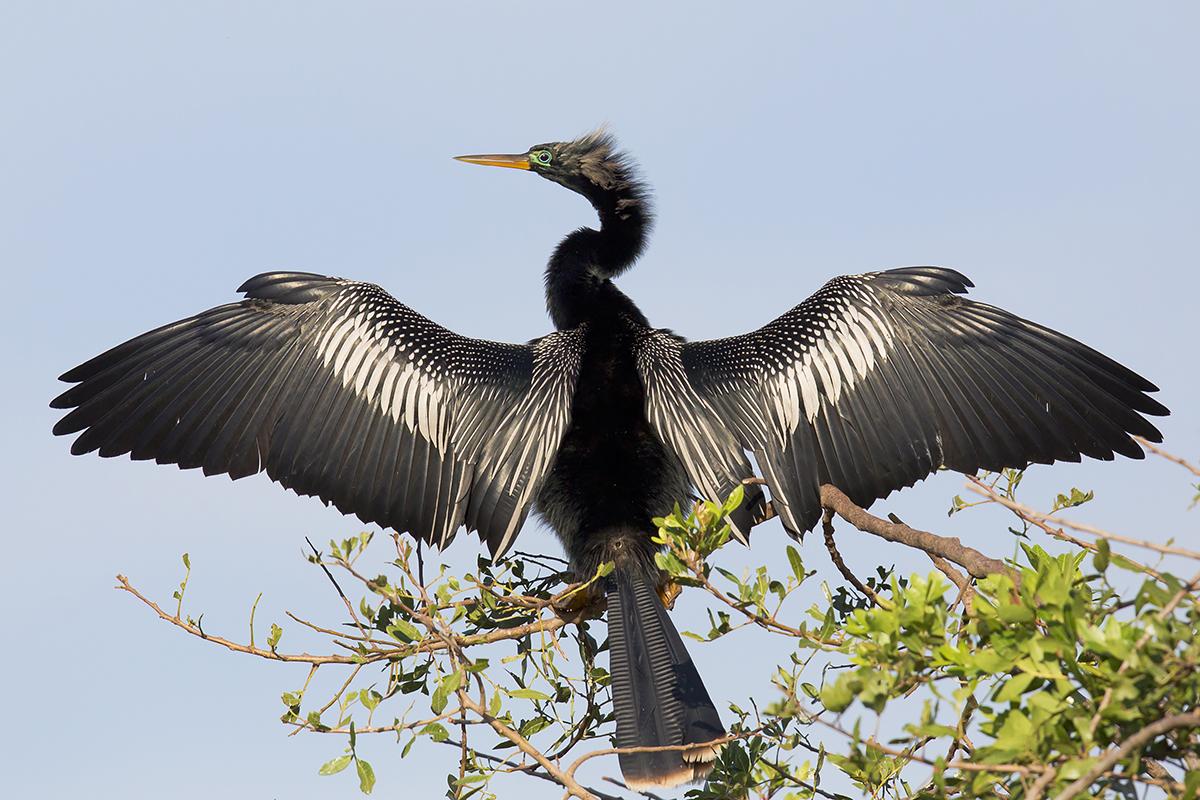 Fine Art Florida Birds_Soaking Up The Sun