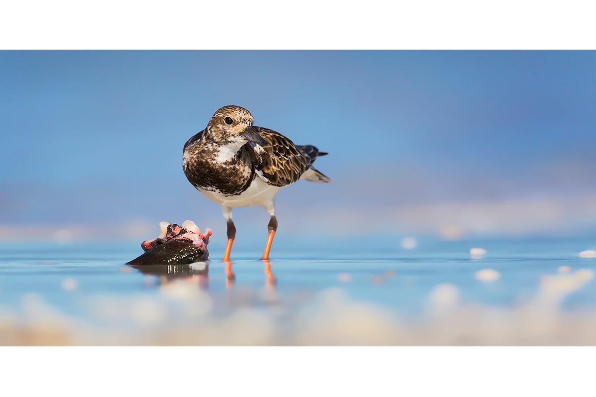 Fine Art Florida Birds_Sushi Quonch