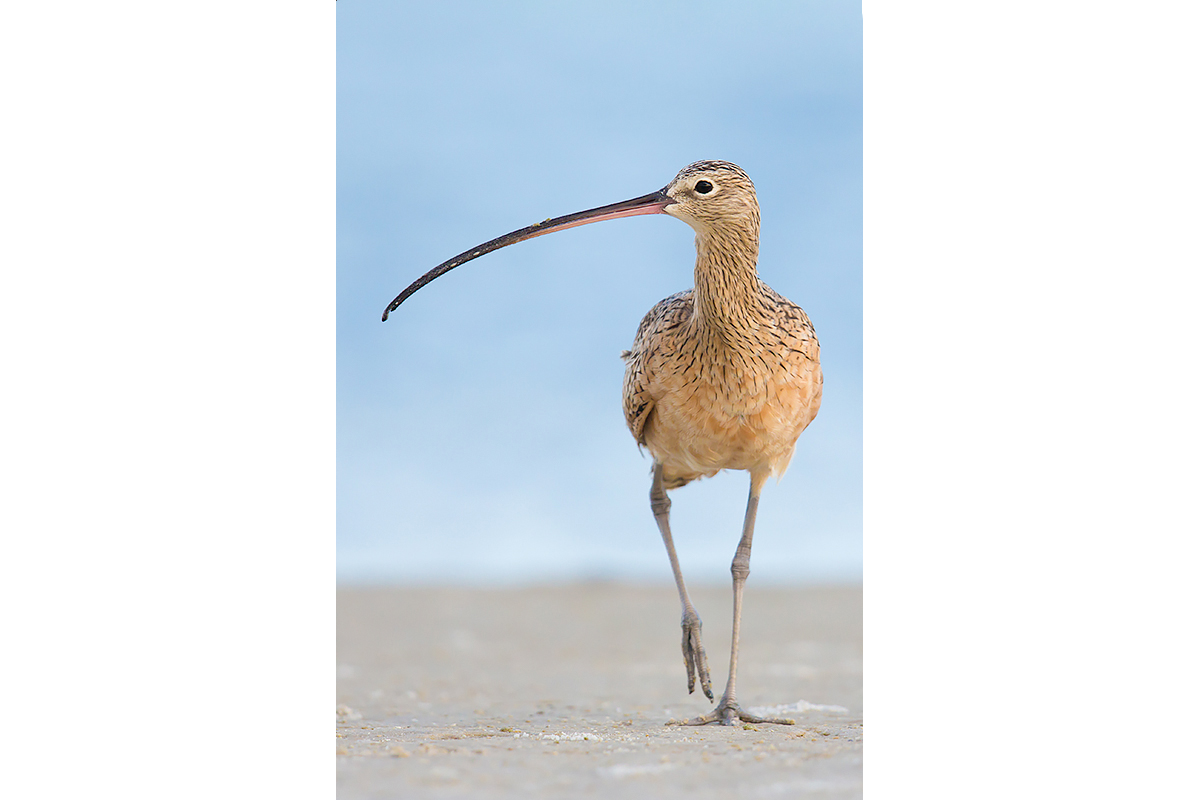 Fine Art Florida Birds_Kilometer Mouth