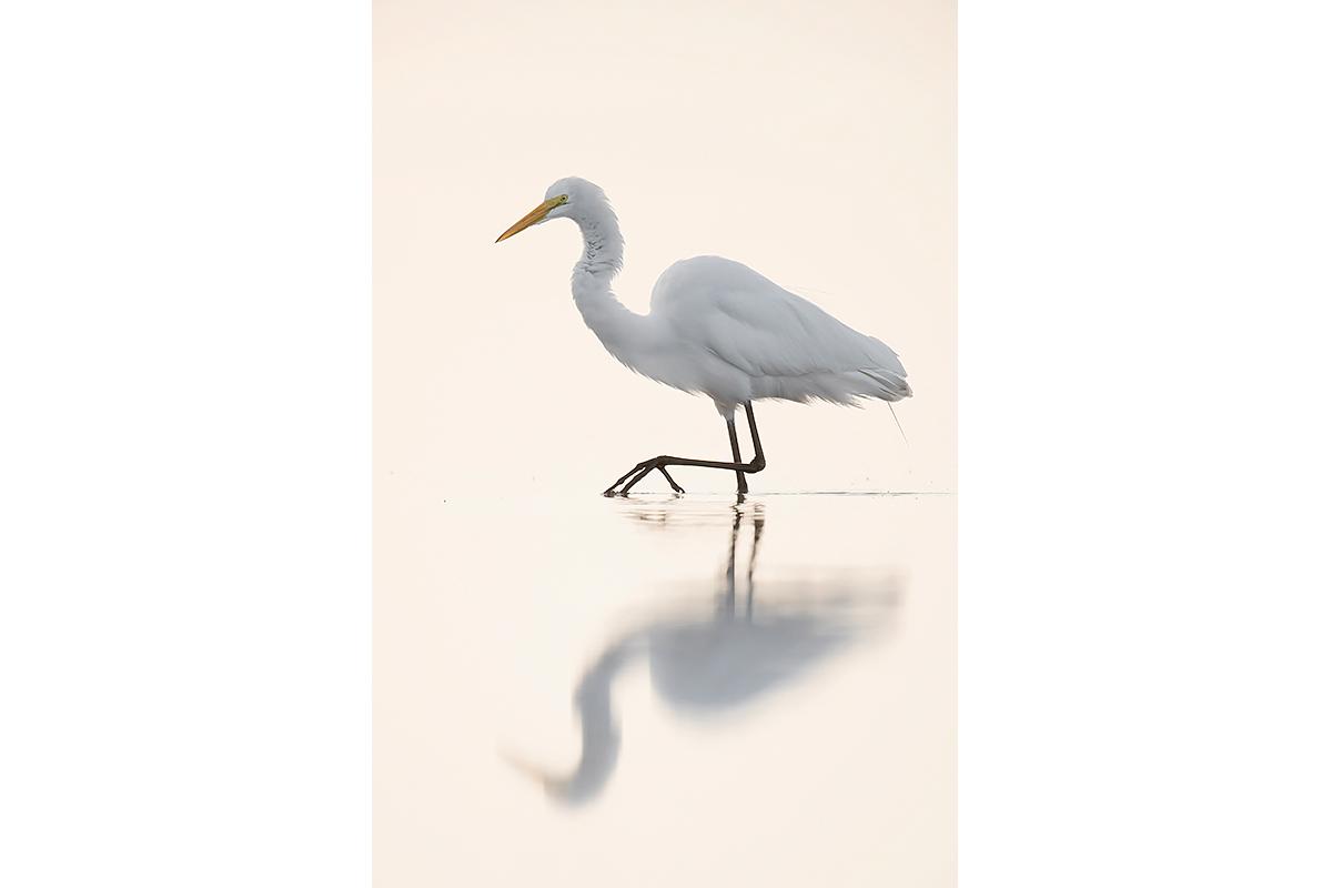 Fine Art Florida Birds_In The Shimmering Light