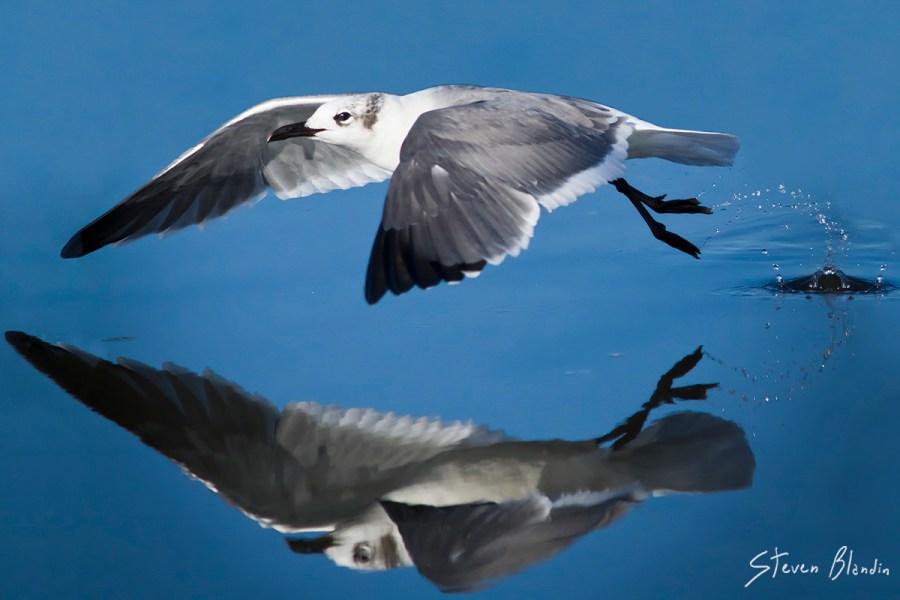 Canon EF 300mm f/4 IS USM_Bird Photography3