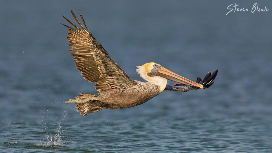 Canon EF 600mm f4 IS II USM_Bird Photography2