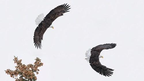 Alaska Bald Eagle Photography Tour_02