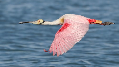 Florida Spoonbill Tour_14