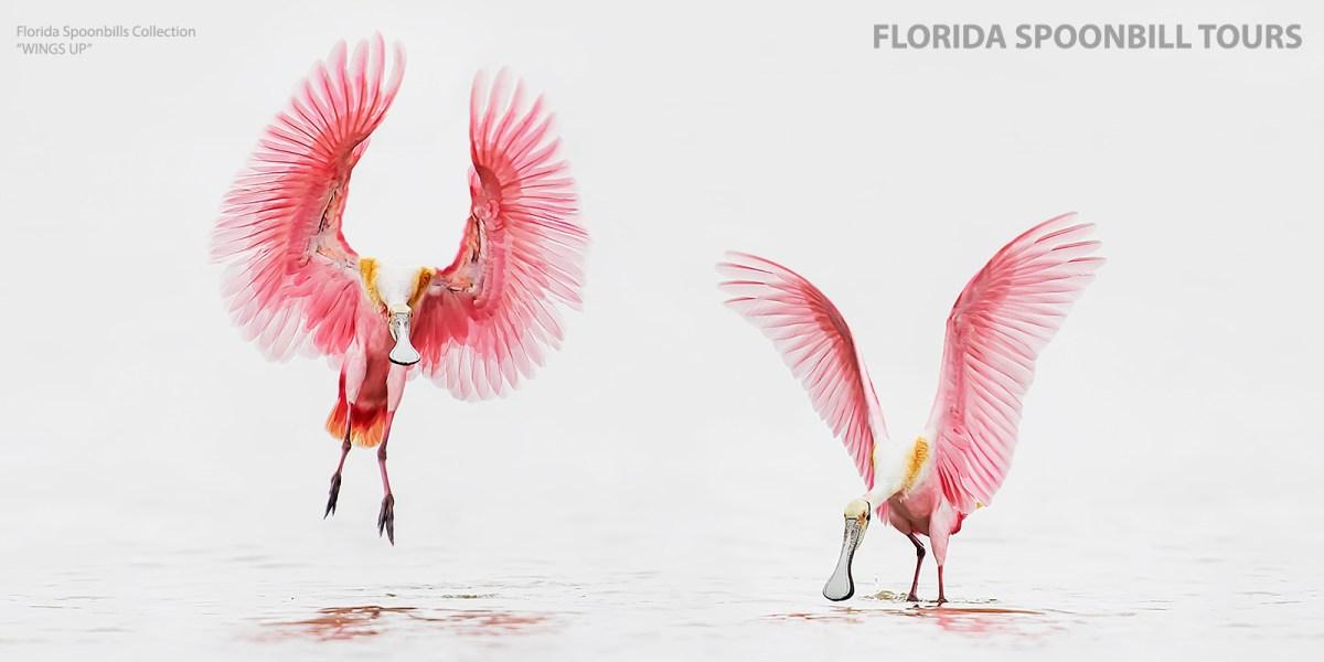 Florida Spoonbill Photography Tour - 2021