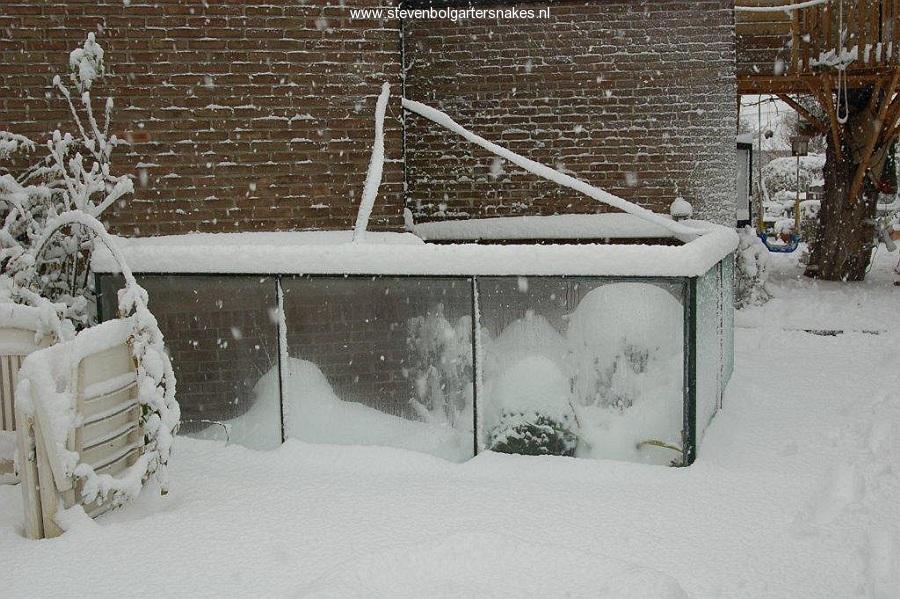 January 2010 - Winter in the outdoor terrarium.