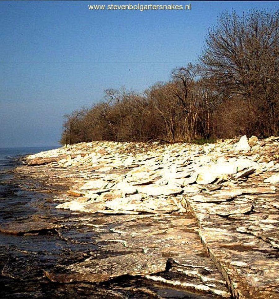 Typical limestone habitat on Pelee Island; may 7th 2005.
