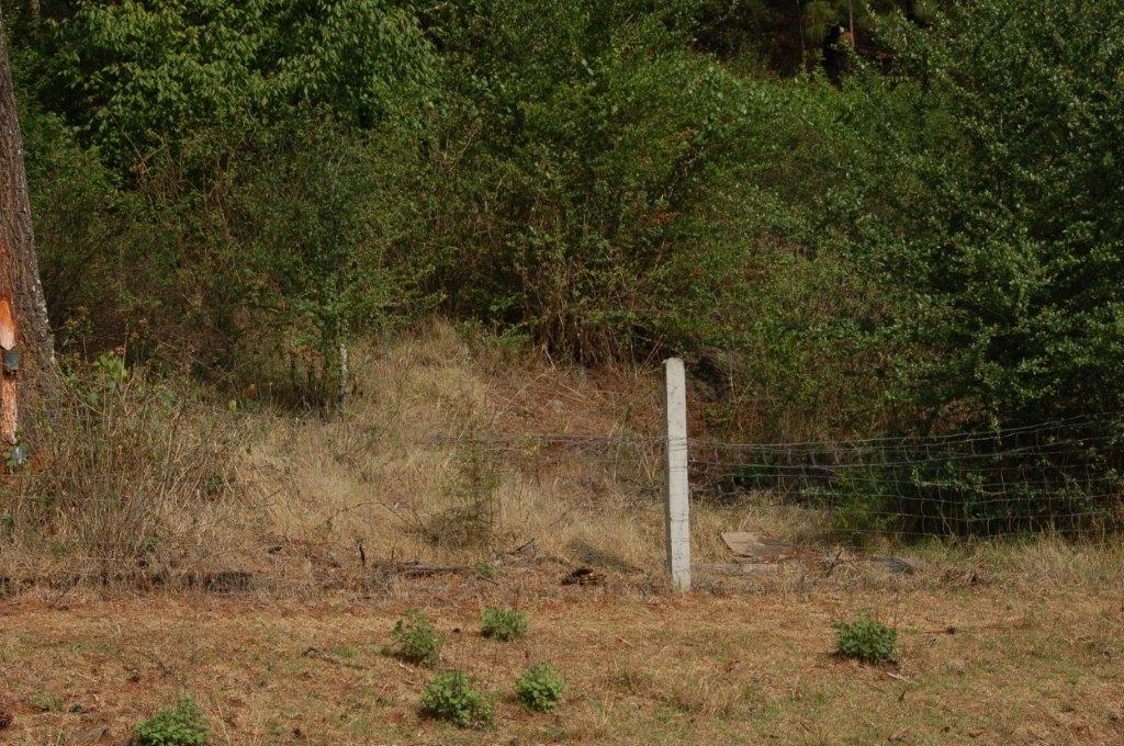 Habitat T. scaliger in Michoacan in May (valley 1; detail)