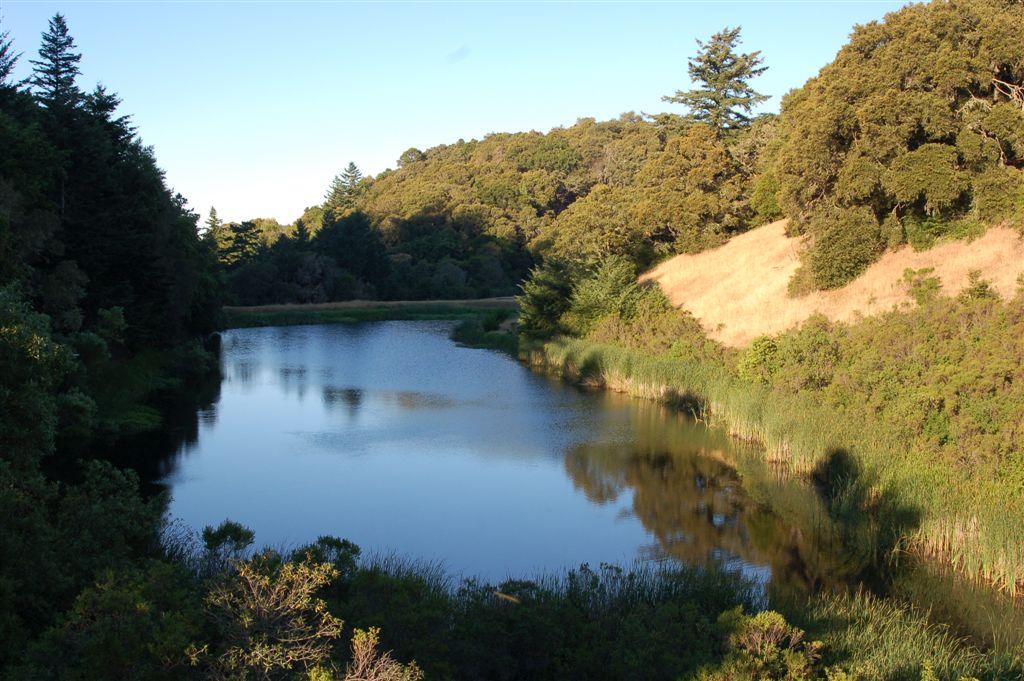 Biotoop - T.a.atratus in San Mateo County California.