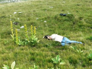 Shooting Gentiana lutea in Montenegro