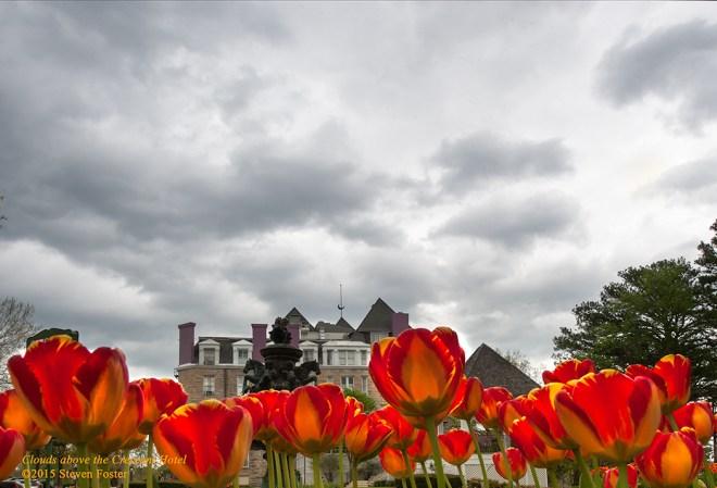 Tulips at the Crescent Hotel, 12 April 2015, Eureka Springs, Arkansas