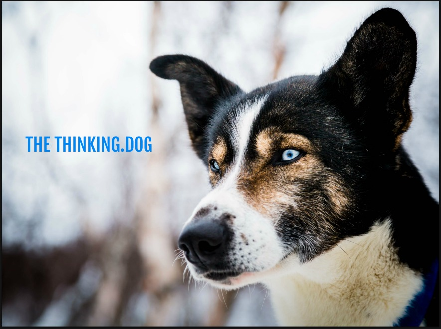 THE THINKING DOG - DO DOGS GET PTSD?