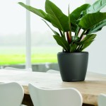 Way To Choose The Best Indoor Plants For Your Office Firm