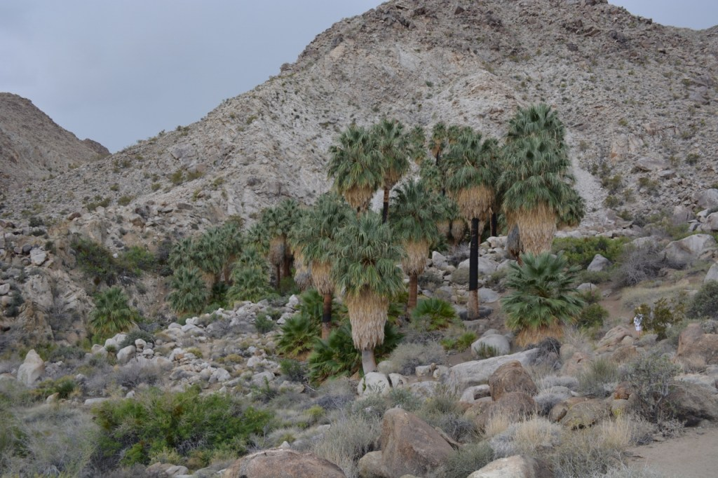 Kathy is on the trail approaching 49 Palms Oasis in Joshua Tree National Park.