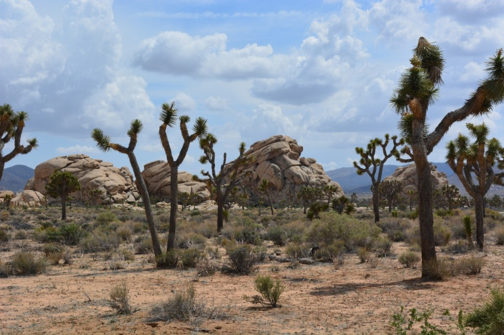 Kathy and I marveled at the fabulous rock formations everywhere we went at Joshua Tree National Park.