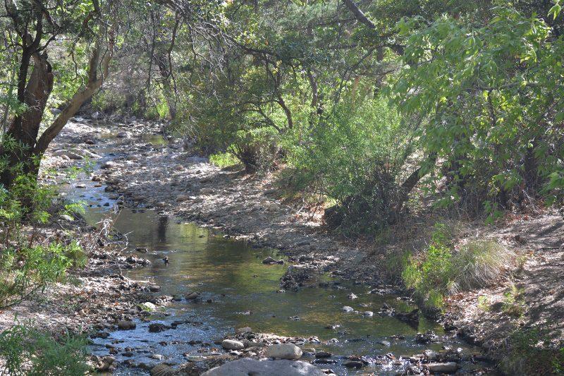 Cave Creek flowing through Chiricahua Mountains. Photo by Steven T. Callan.