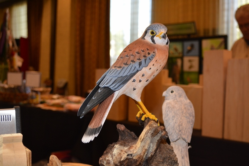 A beautiful American kestrel, carved by Chester Wilcox, on display at the Pacific Flyway Decoy Association Wildfowl Art Festival