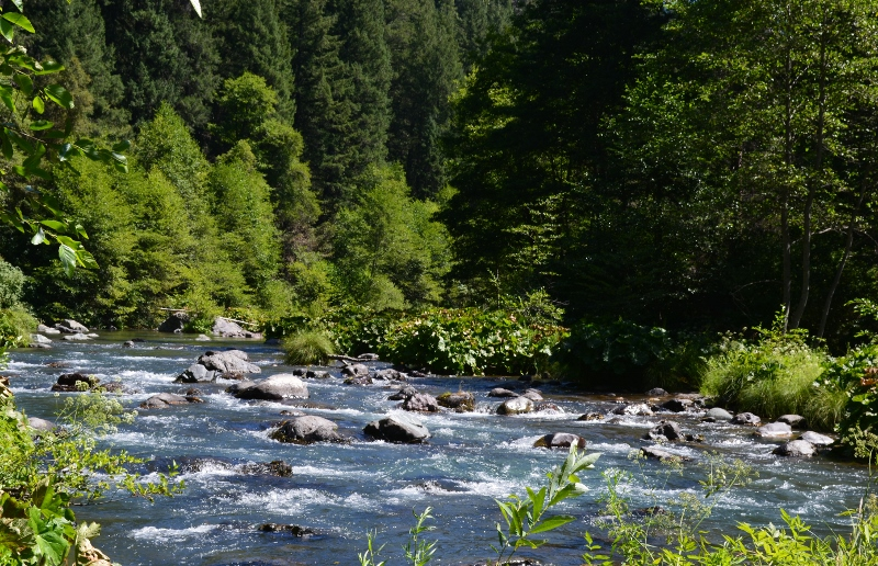Riffles span the turquoise waters of the McCloud River. The McCloud is one of the premier fly-fishing streams in the western U.S. Photo by author Steven T. Callan.