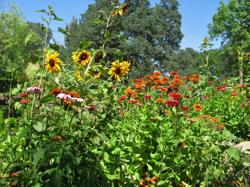 Every spring we roll out the welcome mat for hummingbirds, butterflies, goldfinches, and native bees by planting wildlife-friendly flowers like Zinnias, Rudbeckia, Echinacea, and sunflowers.