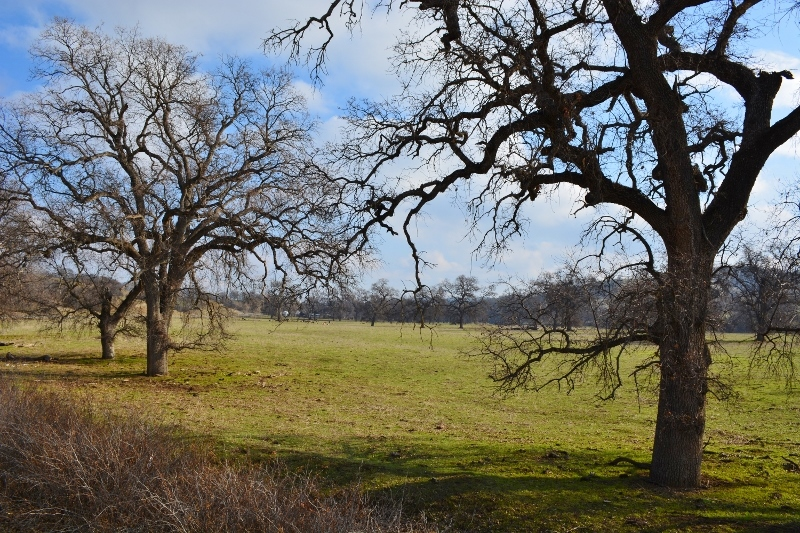 The old Flood Ranch, as seen from Newville Road, Glenn County, California. Photo by Steven T. Callan.