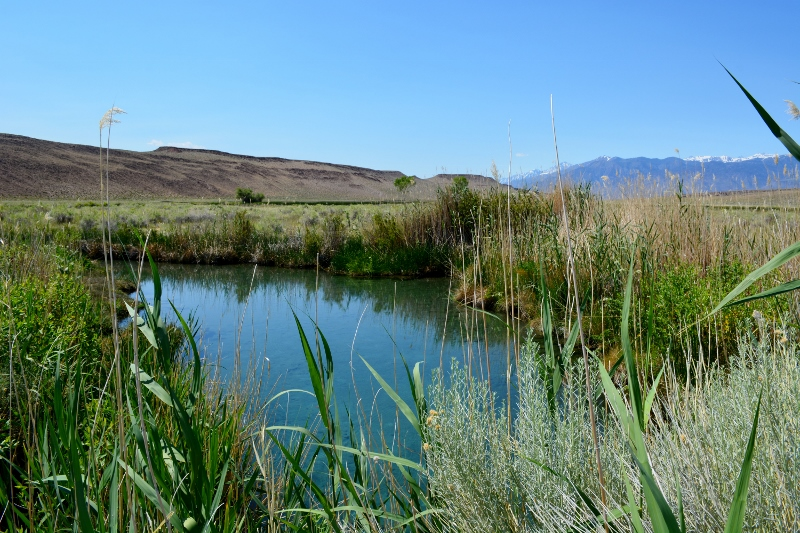 The pupfish pool at Fish Slough. Photo by Steven T. Callan.