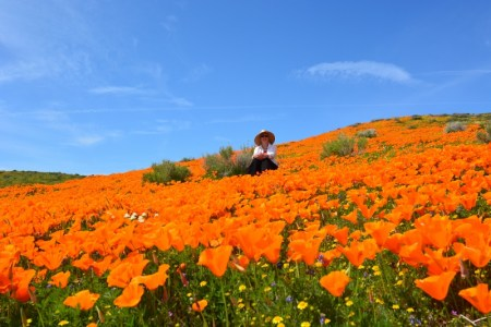 Kathy Callan sits in a field of poppies in the Antelope Valley, California. Photo by Author Steven T. Callan.