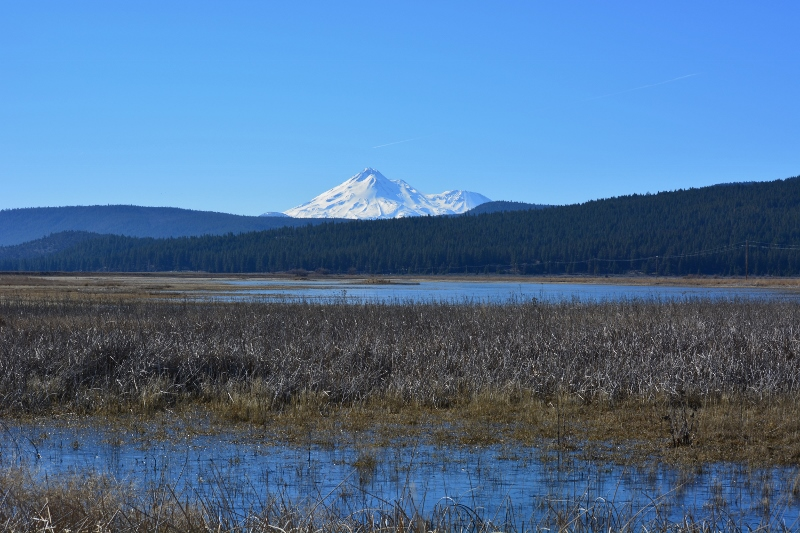 Mount Shasta can be seen in this view of the Butte Valley Wildlife Area.